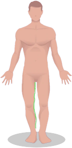chest-img7.png