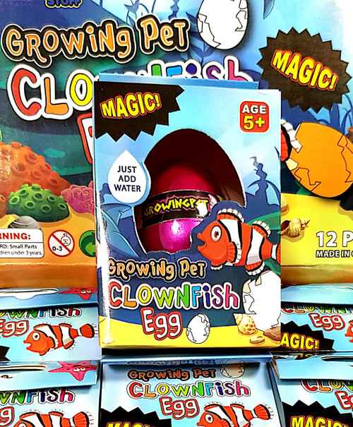 Growing Pet Clown fish Egg