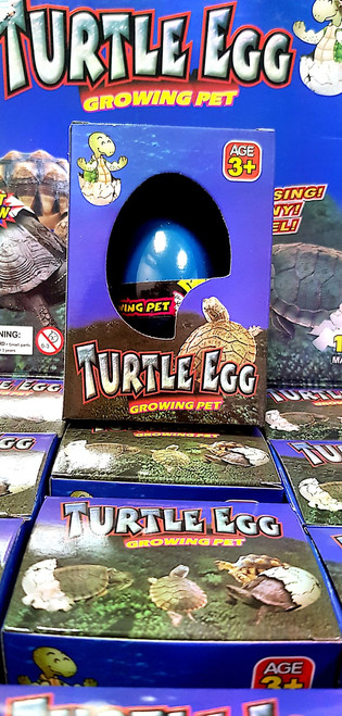Growing Pet Turtle Egg