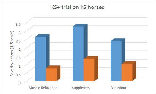 trial-on-kissing-spine-horses.jpg