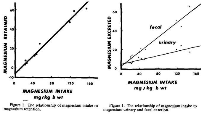 magnesium-retention-in-horses.jpeg