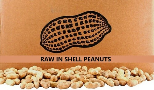 Our Virginia Raw peanuts are plucked straight from the earth, cured and sent to you otherwise unaltered. These extra large Virginia peanuts are valued for their high nutritional value and large meaty size. Our RAW Virginia peanuts are 100% all natural with no additives or preservatives! You save when you buy RAW Virginia peanuts direct from our farm, so come on and go nuts with ROYAL OAK PEANUTS!     ROYAL OAK PEANUTS STATES THESE PEANUTS IN THESE CONTAINERS ARE RAW AND HAVE BEEN INSPECTED BY THE USDA, BUT STILL MAY CONTAIN BACTERIA, AND IF NOT COOKED PROPERLY COULD CAUSE ILLNESS.  FOR YOUR PROTECTION, ANY PEANUTS LABELED AS RAW MUST BE COOKED PRIOR TO CONSUMPTION.     All Natural. NO Preservatives. NON-GMO. Gluten Free   Love the land • Respect your roots • Give your be