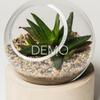 [Sample] Orbit Terrarium - Small