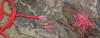 "Sona Enterprises 100' x 5/32"" Paracord 7 Strand with Wax Tinder Cord ORANGE"