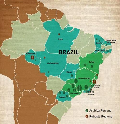 Brazil Legender 17/18 Dark Roast