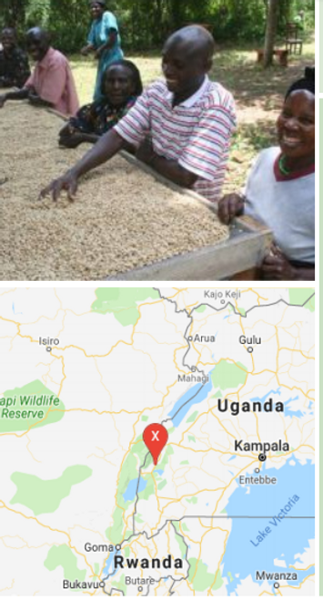 Organic Fair Trade Uganda Bukonzo  Dark Roast