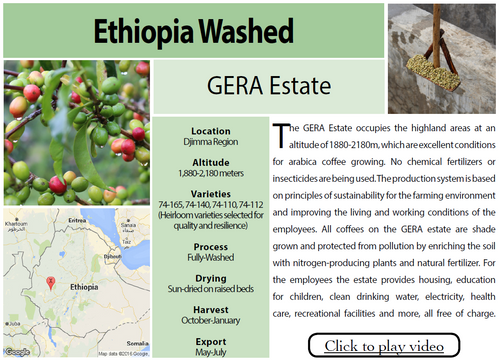 Ethiopia Gera Wet Process Light Roast