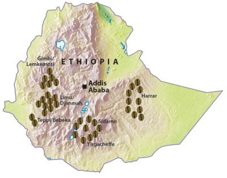 Ethiopia Gera Wet Process Light Roast