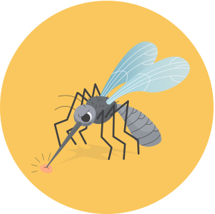 mosquito eater