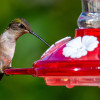 More Birds Diamond Hummingbird Feeder 30 oz.
