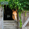 Country Heritage Essential Horse 12% Pelleted Feed, 50#