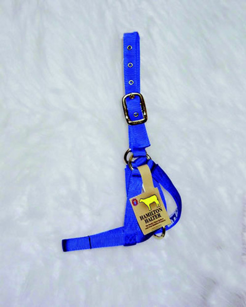 Hamilton Cow Blue Turnout Halter, 1