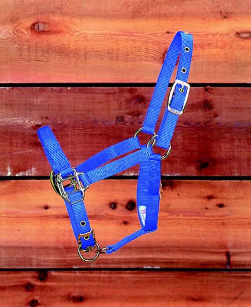 Hamilton Blue Nylon Halter, Foal