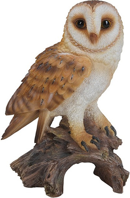 Nature's Gallery Barn Owl