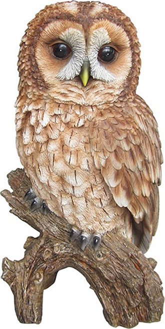 Nature's Gallery Tawny Owl