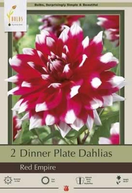 Netherland Bulbs Dinner Plate Dahlias Red Empire