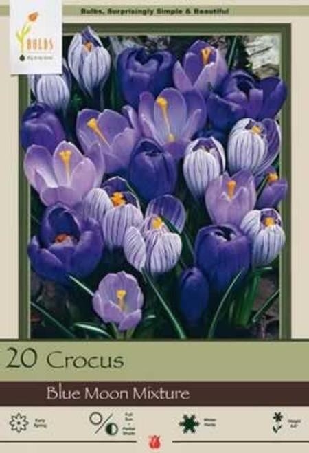 Netherland Bulbs Crocus Large Flowering Blue Moon Mixture