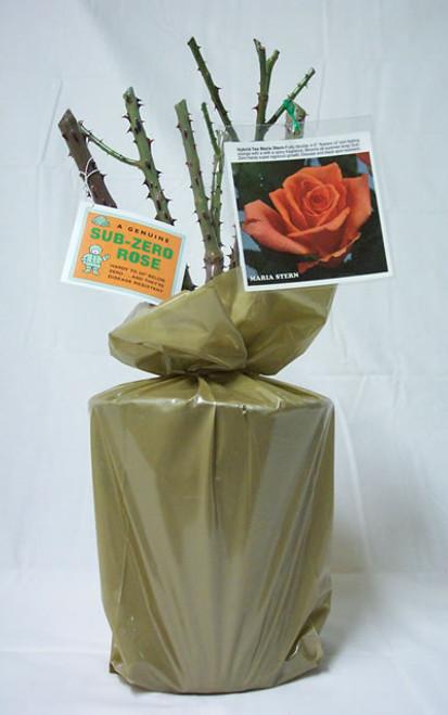 Garden Galleries Sub Zero Rose Collection