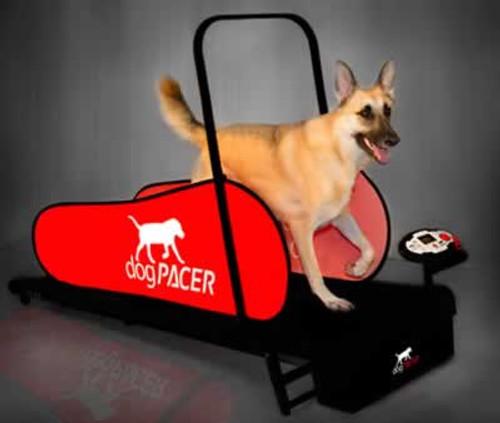 Dog Pacer LF 3.1 Treadmill
