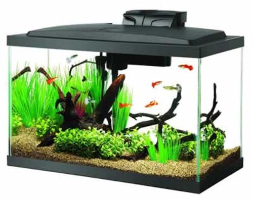 Aqueon LED Aquarium Kit 10 Gallons
