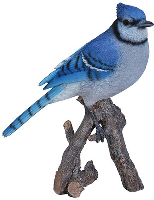 Nature's Gallery Blue Jay