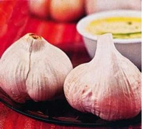 Netherland Bulb Elephant Garlic 2 Pack