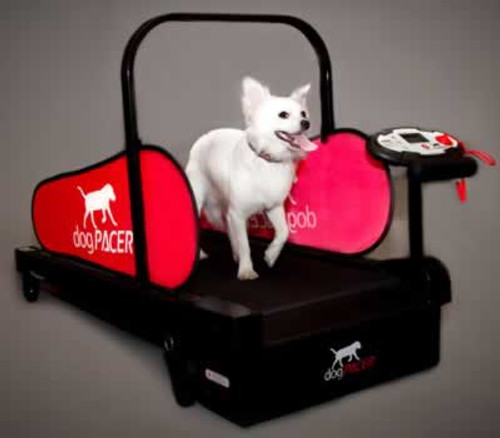 Dog Pacer MiniPacer Treadmill