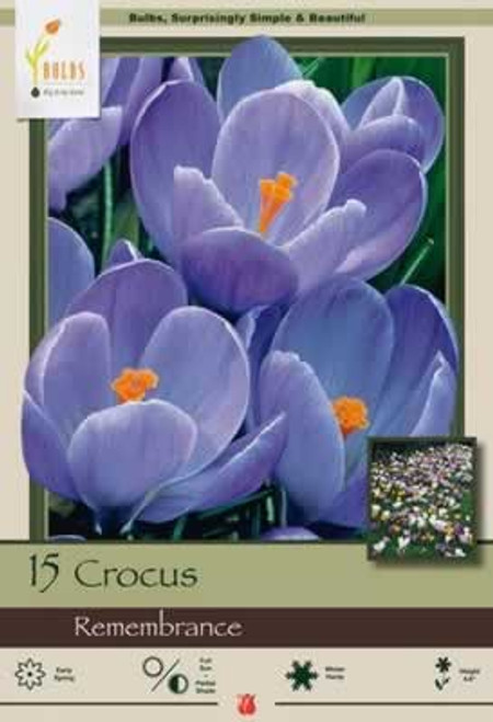 Netherland Bulbs Crocus Large Flowering Remembrance