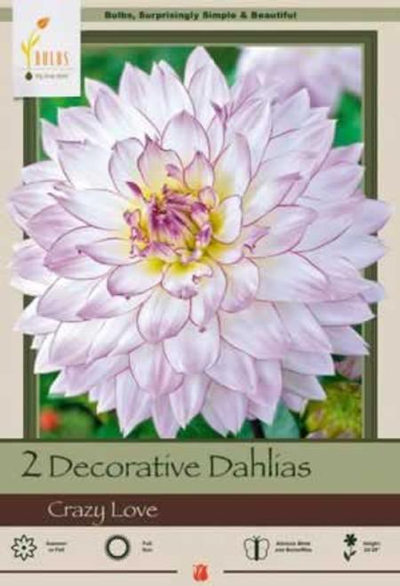 Netherland Bulbs Decorative Dahlias Crazy Love