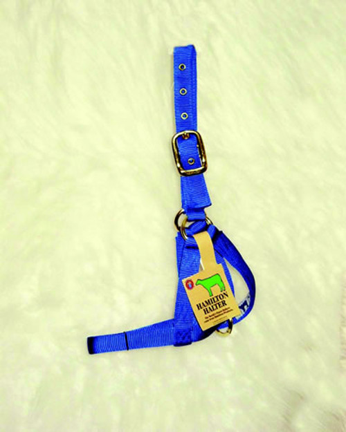 Hamilton Calf Blue Turnout Halter, 1