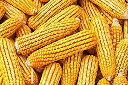 Bulk Corn Cobs for Wildlife Feeding 25 Pounds
