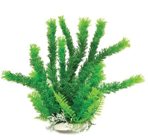 Aquatop Aquatic Supplies Green Cabomba Like Aquarium Plant