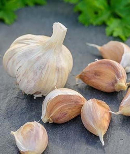 Netherland Bulb German Red Garlic 2 Pack