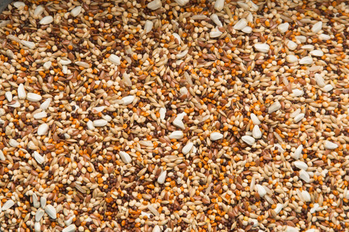 Purgrain Candy 16.2% Pigeon Feed