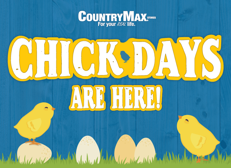chick-day-landing-page-1.png