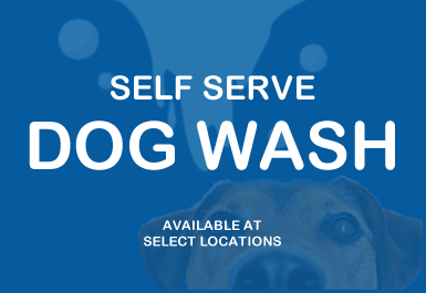 dog-wash4.fw.png