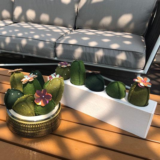 Cactus Pincushion Dish Garden