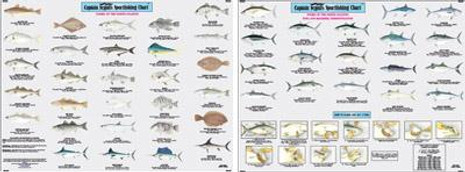 Capt Segull's Fishes Of The North Atlantic Chart - 653210103339