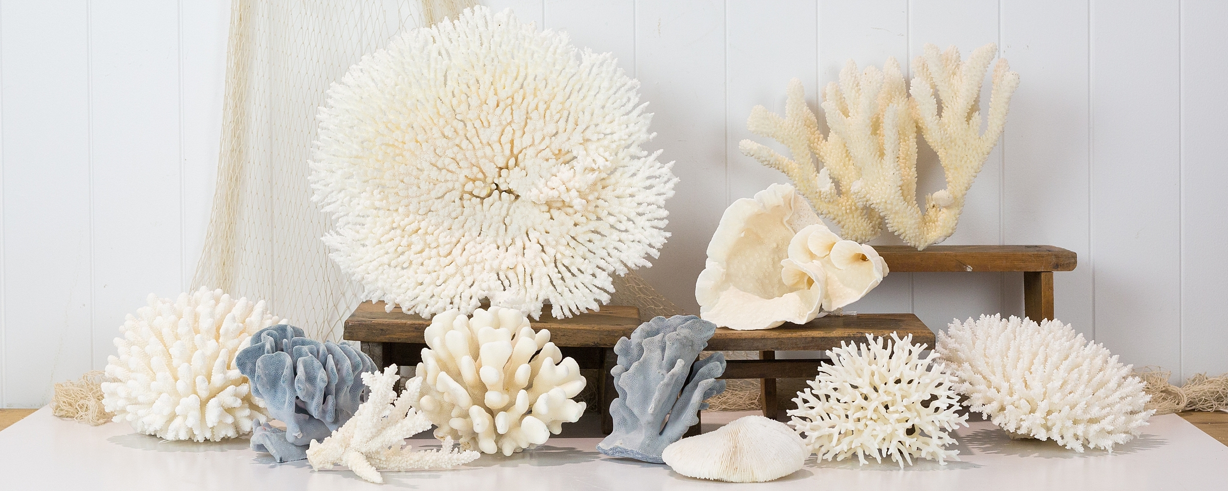Giant Clam Shells & Coral