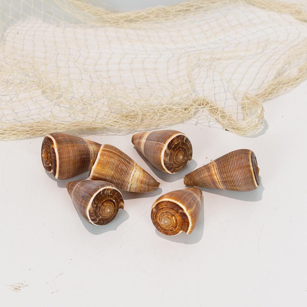 Cone Shell - Stripe #1115