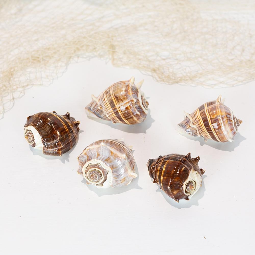 Brown Conch Small #1149
