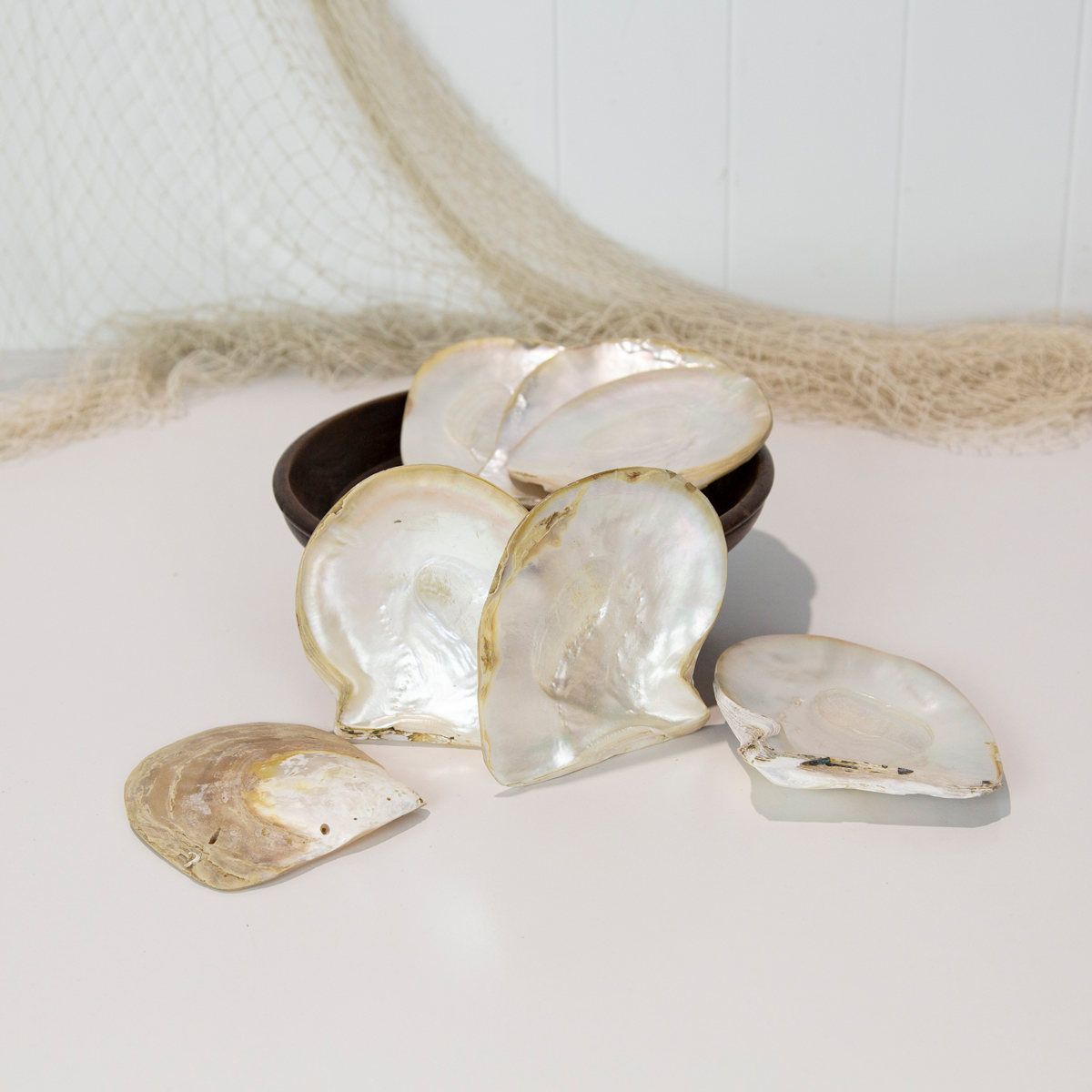 Pearl Shell #5782