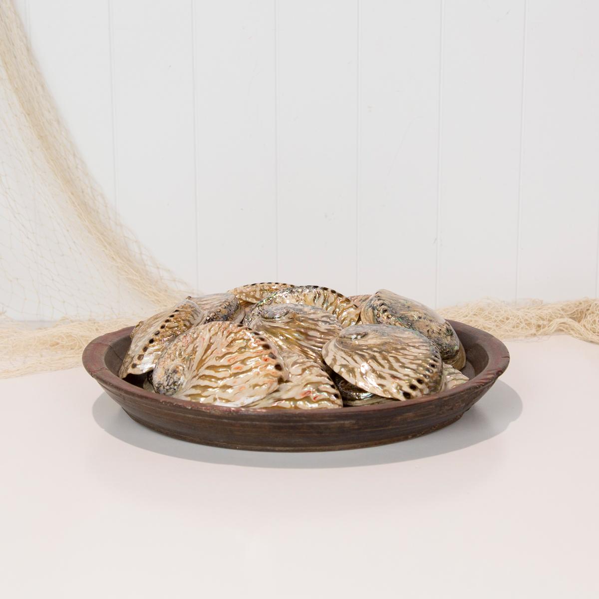 Abalone Shell #1158