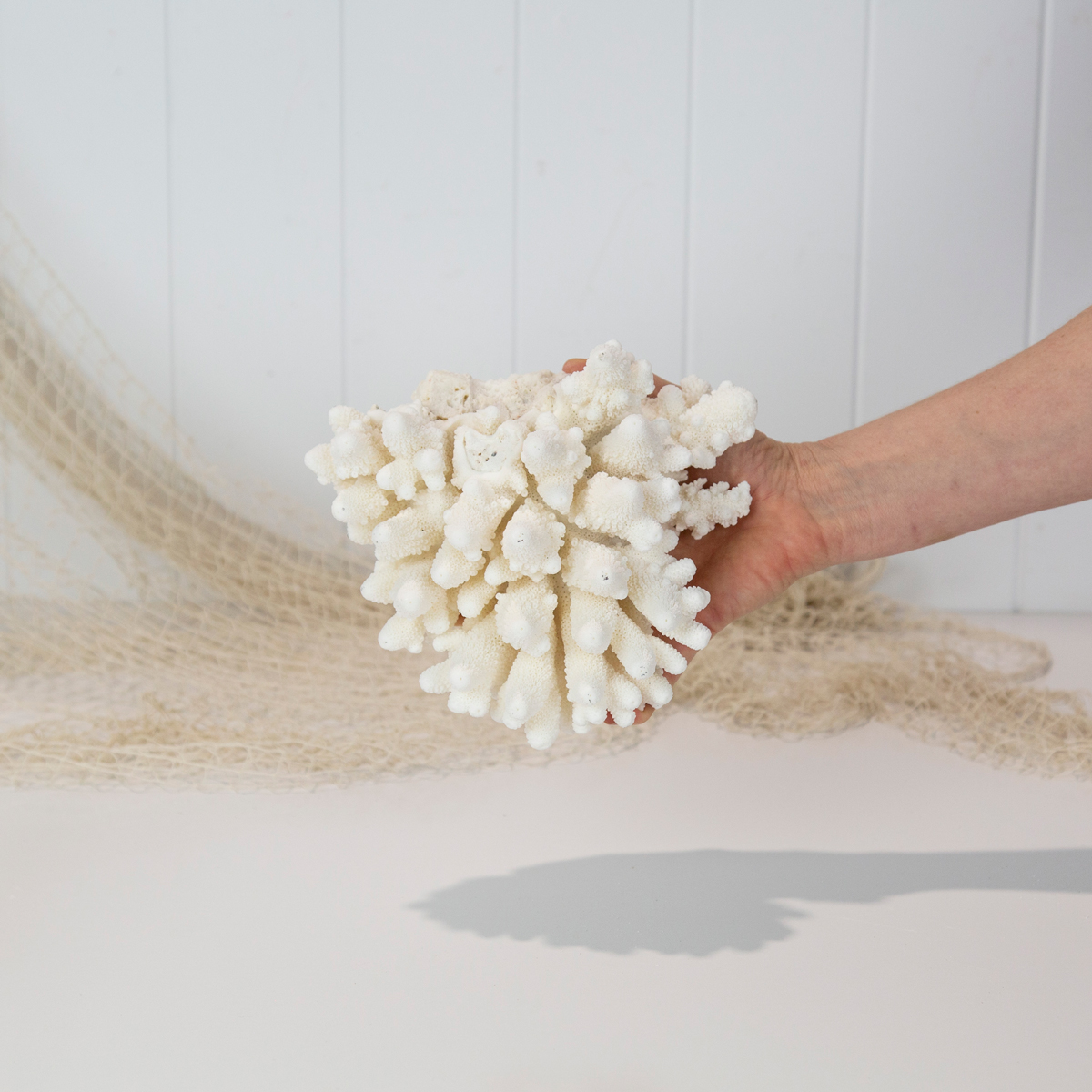 Finger Coral #6122