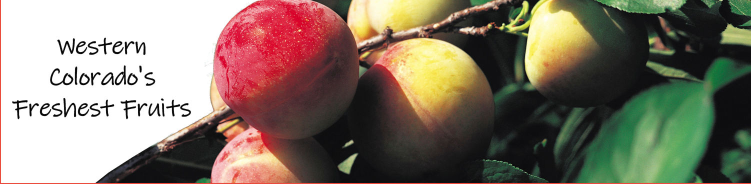 Palisade Peaches | Colorado Peaches & Fresh Fruits