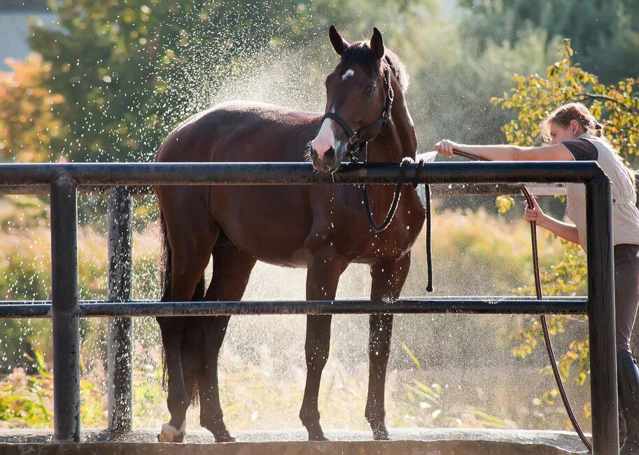 What You Need to Know About Equine Skin Health