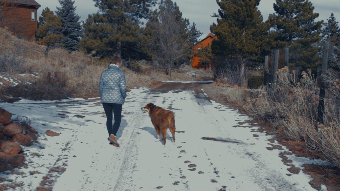 Meet Baxter Brookins: Steadfast Results Dog
