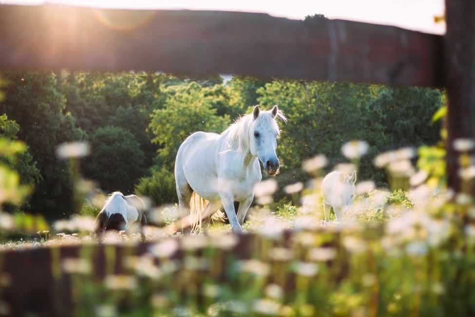 Four Tips for Foaling Season