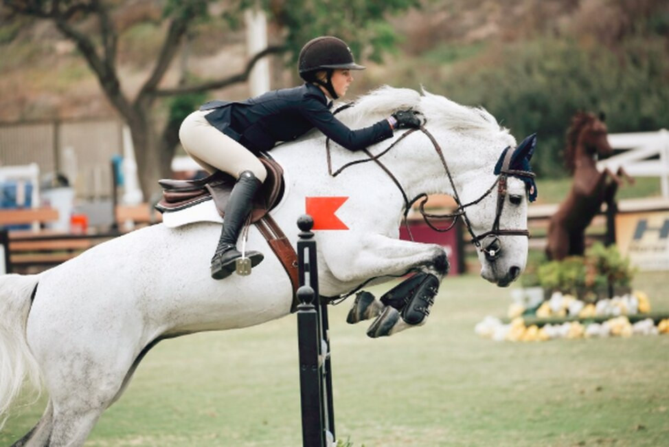 The Key Steps to Equine Performance Recovery