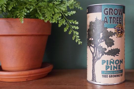 Piñon Pine | Seed Grow Kit